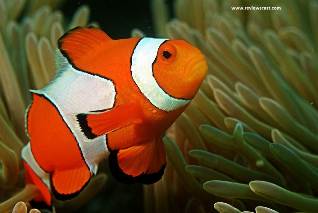Scientific questions about fish