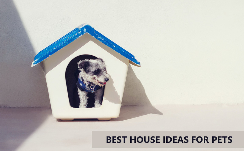 Best House Ideas For Pets