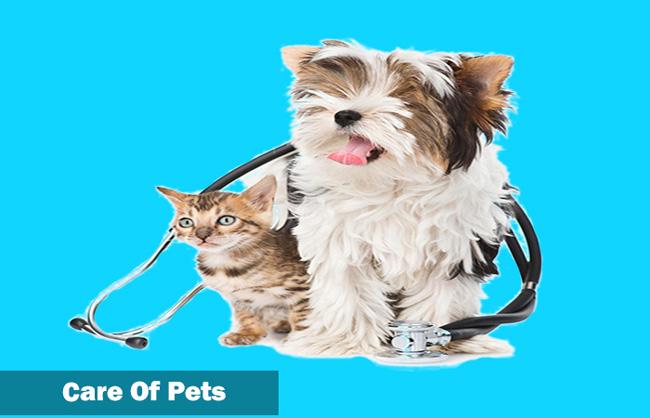 Pet area ideas
