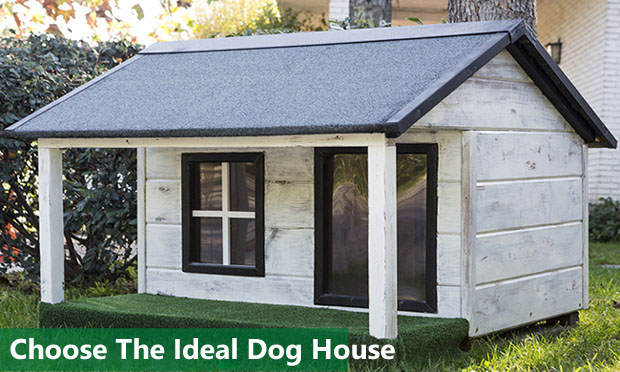 How To Choose The Ideal Dog House
