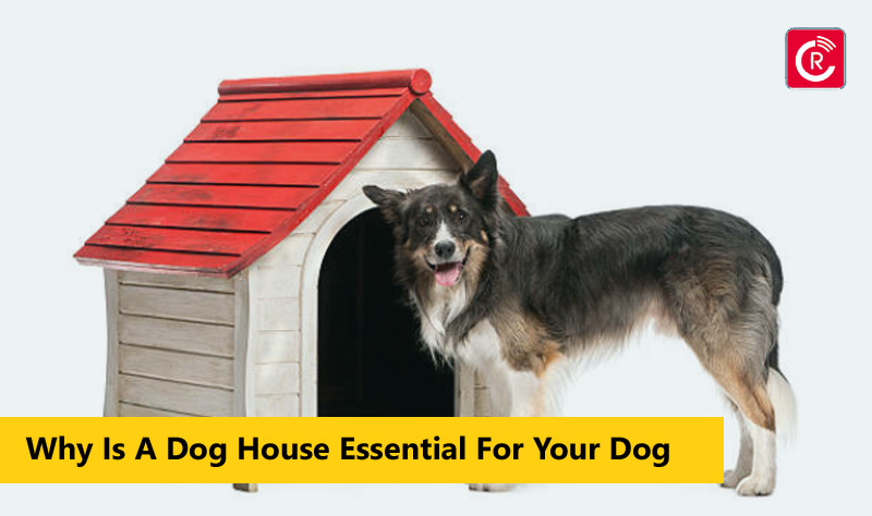 Why Is A Dog House Essential For Your Dog