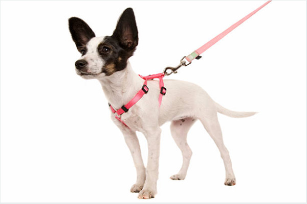 Back Clip Dog Harness