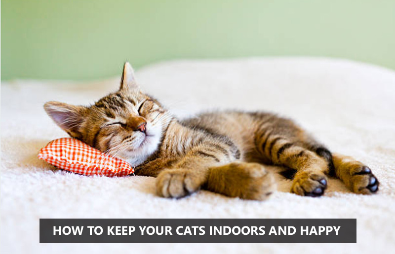 How To Keep Your Cats Indoors And Happy