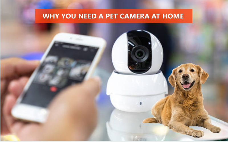 Why You Need A Pet Camera At Home