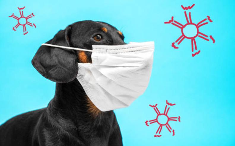 Can Your Dog Get Corona Virus