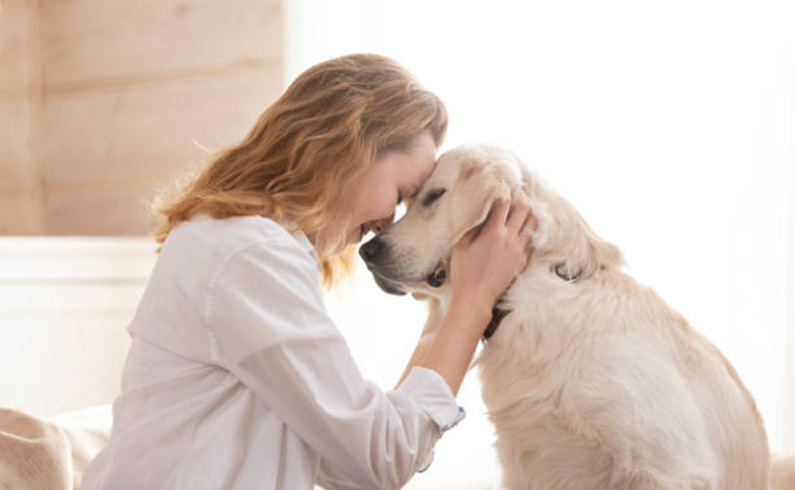 What Are Some Suitable Jobs For Pet Owners