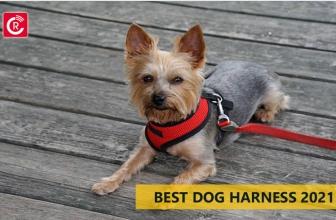 Best Dog Harness 2021