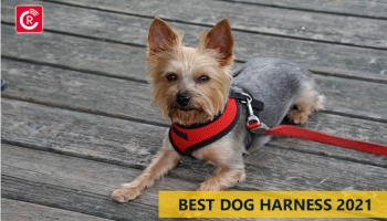 Best Dog Harness 2021