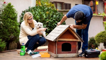 DIY Building A Perfect Dog House