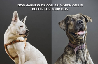 Dog Harness Or Collar, Which One Is Better For Your Dog?