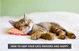 How To Keep Your Cats Indoors And Happy?