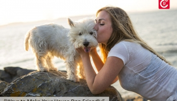 """Ways to Make Your House """"Dog-Friendly"""""""