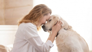 What Are Some Suitable Jobs For Pet Owners?