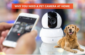 Why You Need A Pet Camera At Home?