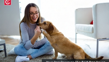 Why Your Dog Deserves The Best Dog House?